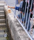 市内の堺川の水質調査をしました。 (3).JPG